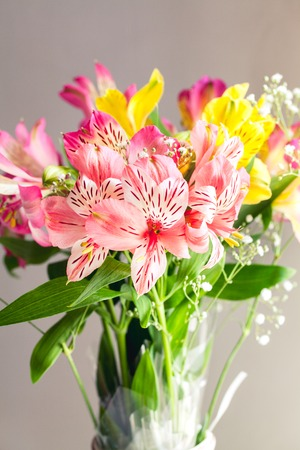 alstroemeria: flowers. Big multicolor alstroemeria. Nature background. Stock Photo