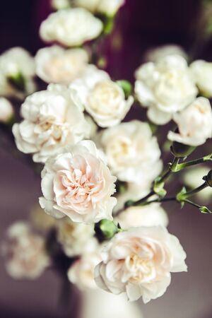 로맨스: 꽃병 빈티지 카네이션의 섬세한 꽃다발. 로맨스