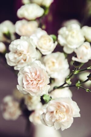romaans: delicaat boeket van anjers in een vaas vintage. romance