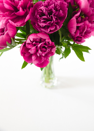 Red peonies in vase on white background a