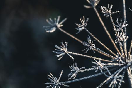 Frozen flower in blue tone, very shallow focus a Stok Fotoğraf