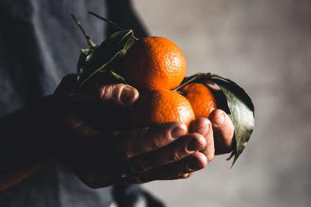 Ripe juicy sweet orange mandarins in a human hand against a dark background. PNOV2019 Stock Photo
