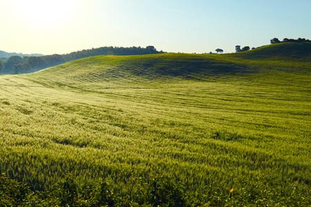 san quirico: Wavy fields in Tuscany at sunrise, Italy