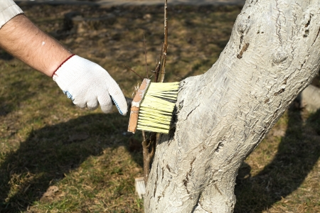 Treatment of trees from pests