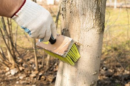 木の害虫からの治療