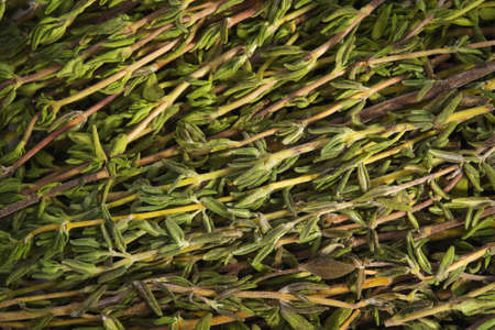 gingery: Background from branches of thyme