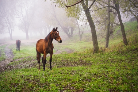 A graceful horse in the pasture. Autumn misty morning. photo