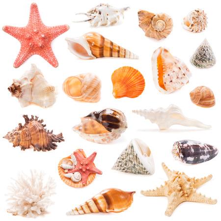 貝殻コレクションが白い背景に分離されました。トップ ビュー 写真素材