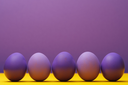 Chicken eggs colored in purple with space for text