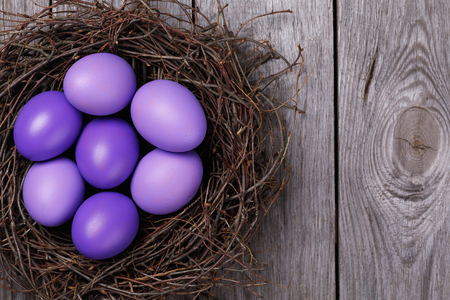 Chicken eggs painted in purple in the nest with space for text, top view