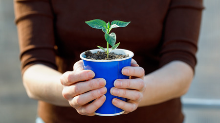 Man holds a seedling of pepper in a paper pot, close-up