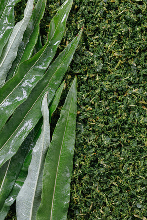 Texture of the collected and fermented leaves of Ivan-tea close-up, top view