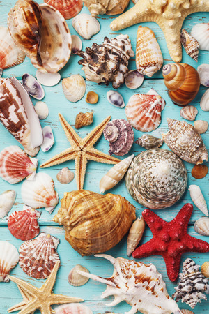 Background from the collection of various sea shells on a wooden board, top view