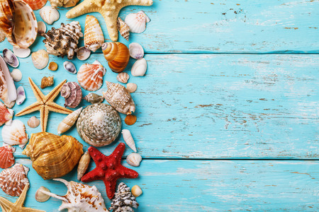 Collection of various sea shells on wooden board with copy space in right, top view