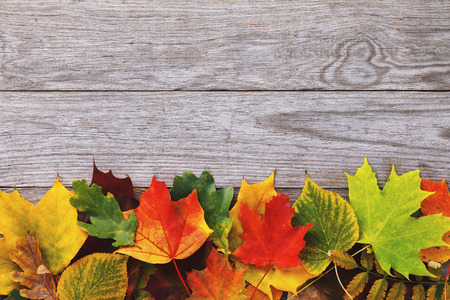 Various autumn leaves on an old wooden board with copy space