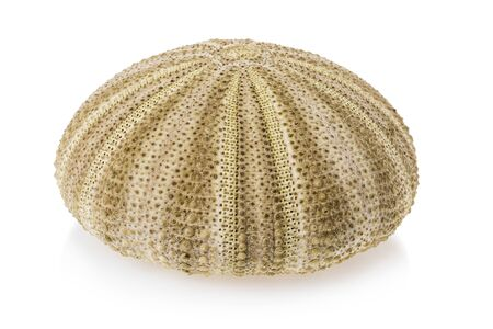 Sea urchin shell isolated on white background