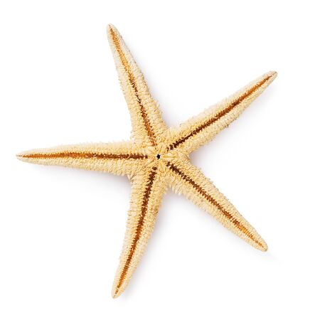 Starfish isolated on a white background. Top view on mollusk shell