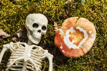 Skeleton on the grass next to the mushroom, top view. Concept on the topic of poisoning