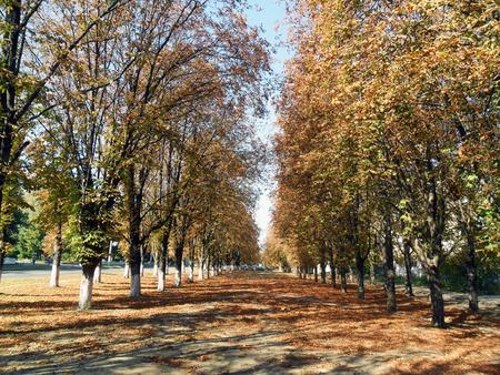 parkway: autumn chestnut parkway