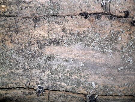 arbol alamo: La corteza del �rbol de �lamo de cerca para el fondo