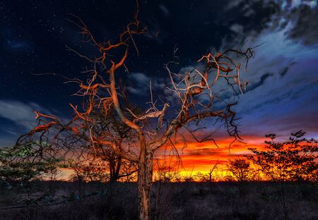 Skyline with twinkling stars Stockfoto