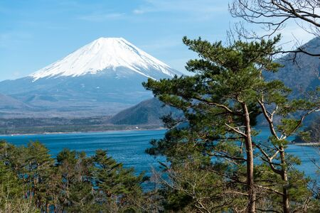 Mount Fuji Japan at the distance with a big pine tree in the foreground