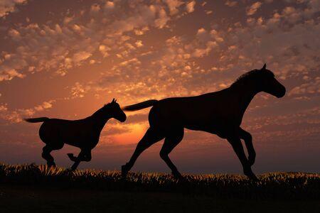 Scene two horses on background of the sundown Stock Photo