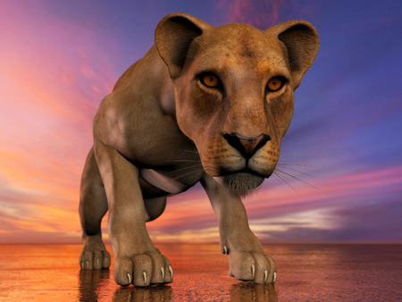 carnivore: The image of a lioness 3D illustration