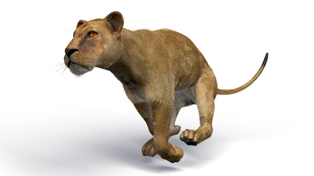 lioness: The image of a lioness 3D illustration