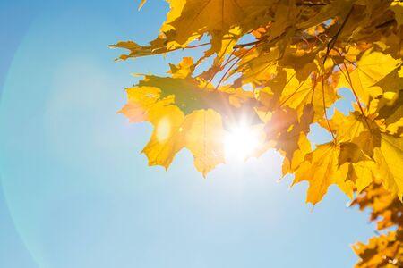 太陽の光が秋の紅葉を貫通します。 写真素材 - 87879012