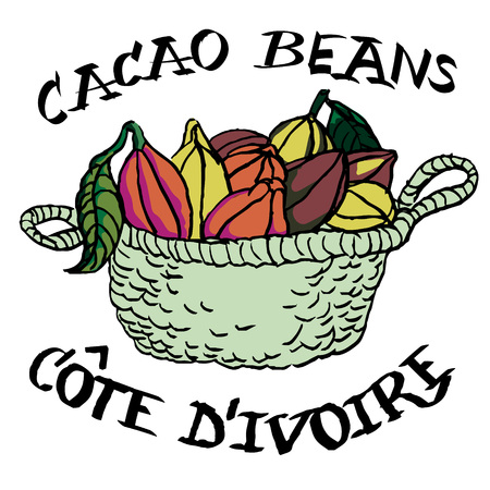 cacao: vector illustration sketch drawing basket raw nature cacao beans with foliage and hand-drawn text on white background