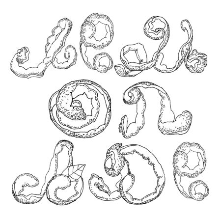 peel: vector illustration stylized engraving of lemon peel in the form of letters Illustration