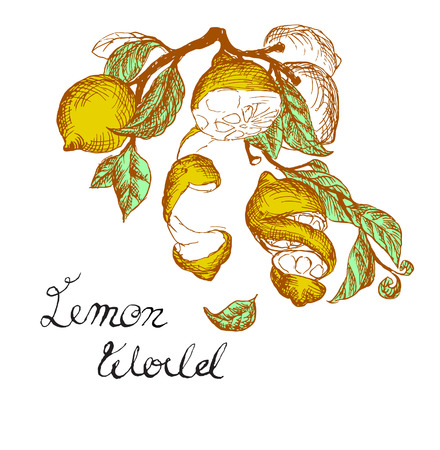 peel: vector illustration stylized drawing lemons with leaves, peel and  text Illustration