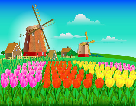 wind mills: vector illustration field of tulips in yellow, pink and red flowers with a mill, farmhouses in the background and clouds in the sky
