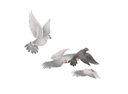 A white pigeons in flight isolated. Realistic style. Vector illustration.