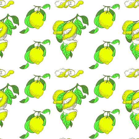 Seamless pattern with hand drawn style lemon fruit on white backdrop. Vector illustration.