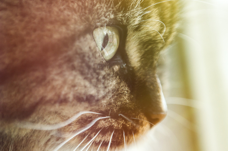 Beautiful cat sitting on windowsill and looking out of a window. Stock Photo
