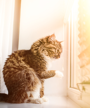 living idyll: Beautiful cat sitting on windowsill and looking out of a window. Stock Photo