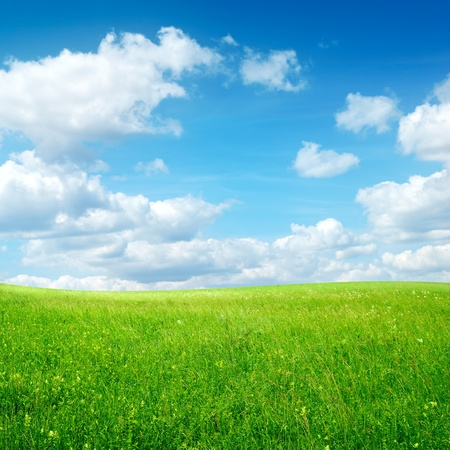 grass field: field with green grass and clouds on blue sky Stock Photo