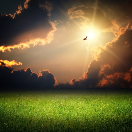 Fantasy landscape. Magic sunset and bird on sky in sun light