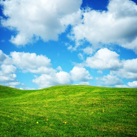 green summer meadow with small flowers and cloudy blue sky
