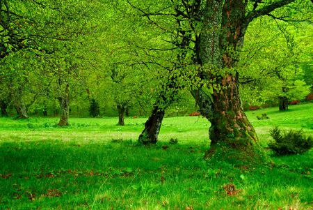tortuous: green tree and moss