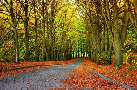 autumn season in the park and golden leaves on walkway