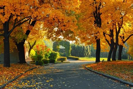 green and yellow trees in park at fall season