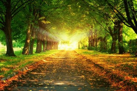 Magic Light v a chodníku v parku na podzim