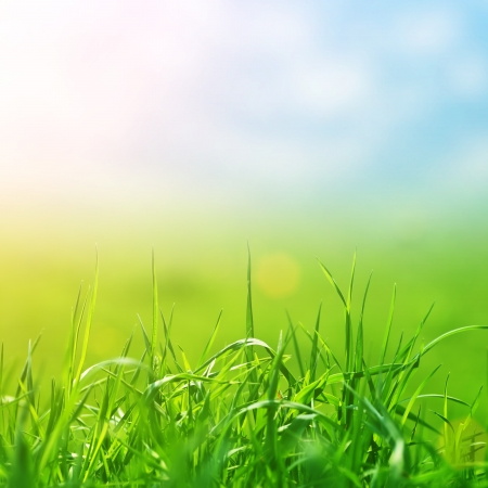 jarní trávy v slunci a rozostření obloha na pozadí