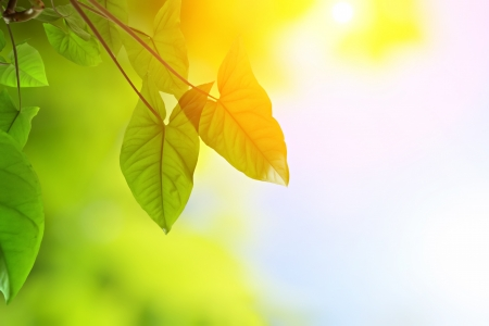 green young leaves in warm sunlight