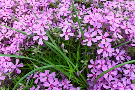 Small pink flowers in green grass closeup stock photo picture and small pink flowers in green grass closeup stock photo 13736693 mightylinksfo