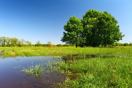 Flood on green meadow, trees and grass in water   Landscape in sunny spring day  Stock Photo