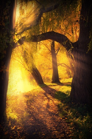 mysterious pathway between arch of trees and sunlight in autumn park Stock Photo